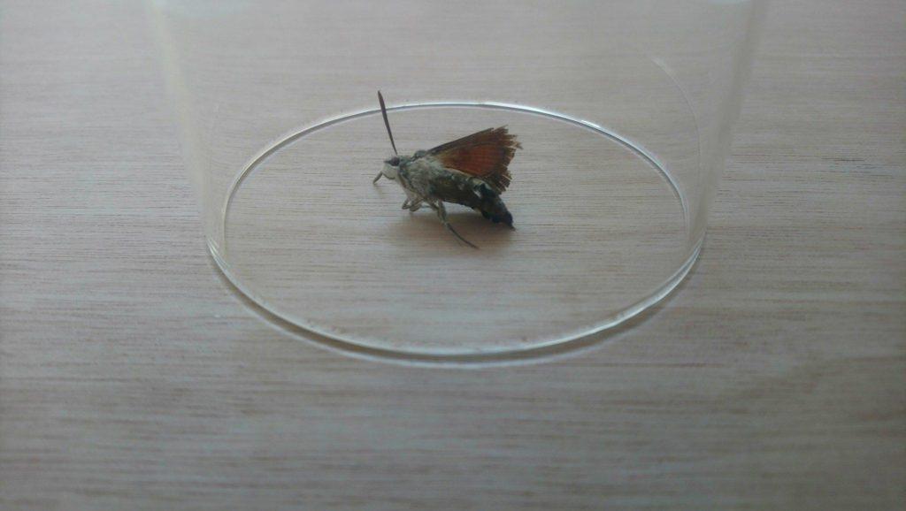 Sarah Deslandes Papillon 2018